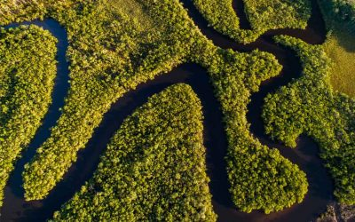 Qual o projeto nacional para a Amazônia?